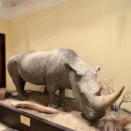 Национален природонаучен музей при БАН