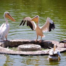 The Sofia Zoo